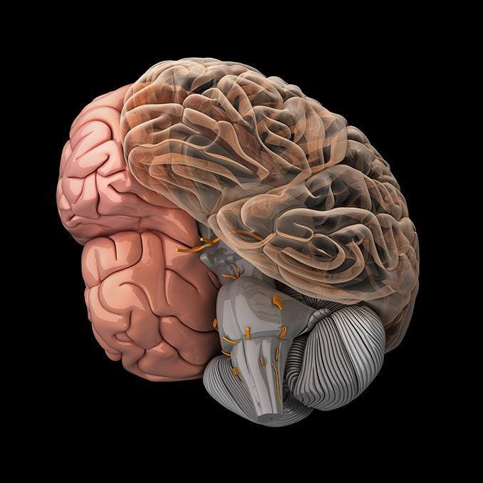 Модели работы мозга работа в красноярске от прямых работодателей девушкам