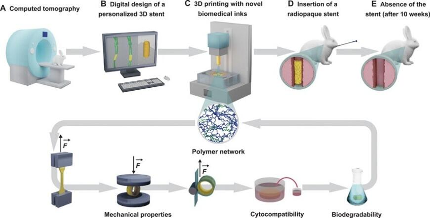 Швейцарские ученые изучили эффективность биорезорбируемых 3D-печатных стентов