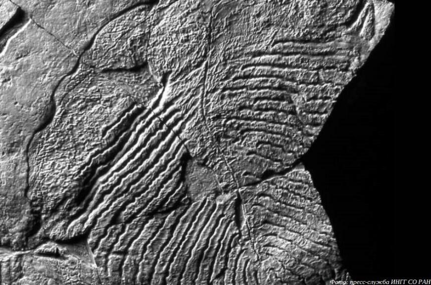 Сибирские ученые смоделируют исчезновение древнейших животных