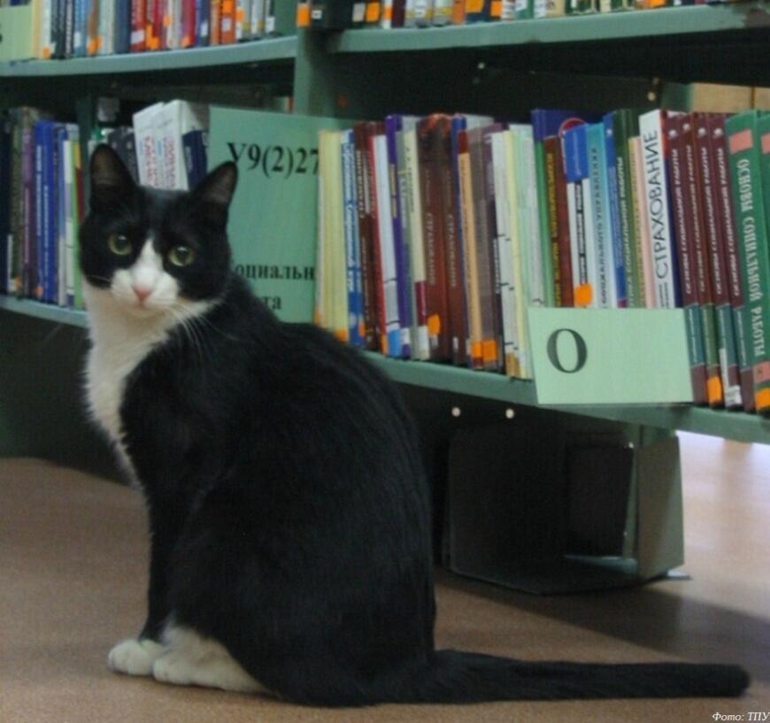 В Томске появился 3D-печатный памятник ученому коту