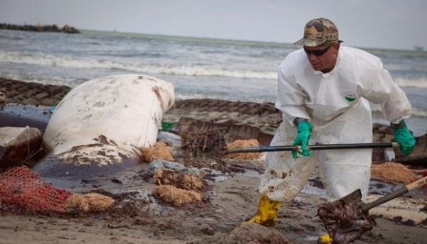 нур туйни разлив нефти в америке в 2016 году сельского поселения