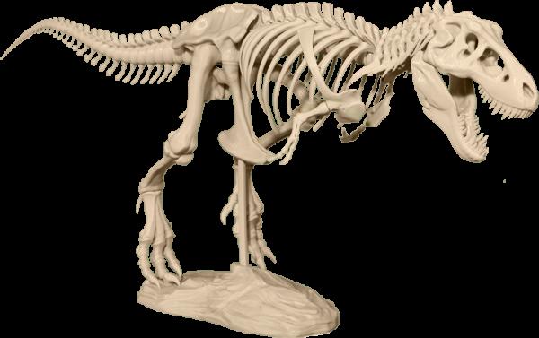 ... специалистов по 3D-моделированию. Модель скелета тираннозавра Рекса в  20 раз меньше реального скелета. Она станет великолепным украшением класса  и дома. d6436a9f3a4cc