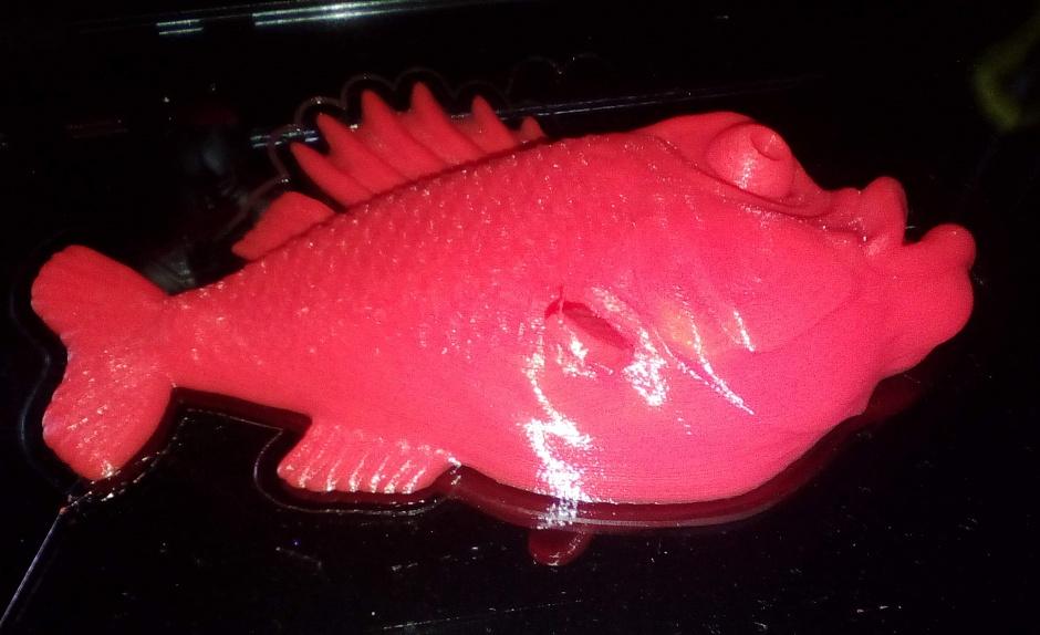 рыб0.JPG